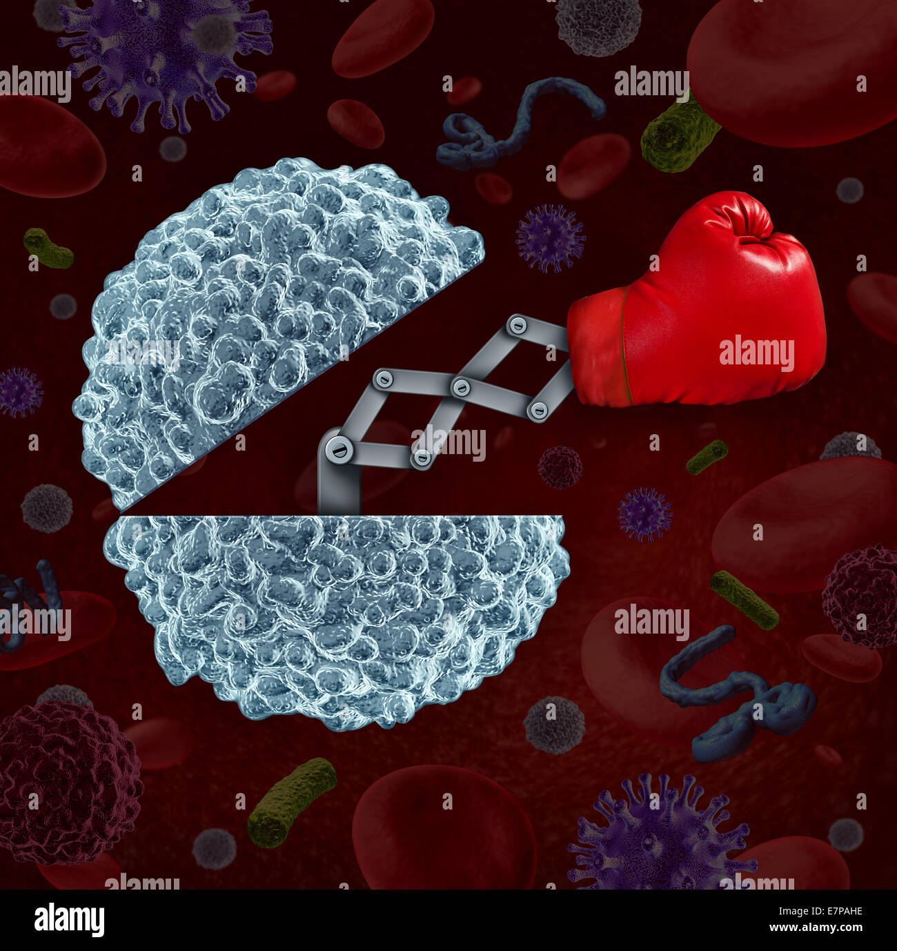 Immune system concept as an open white blood cell with a boxing glove emerging as a health care metaphor for fighting - Stock Image