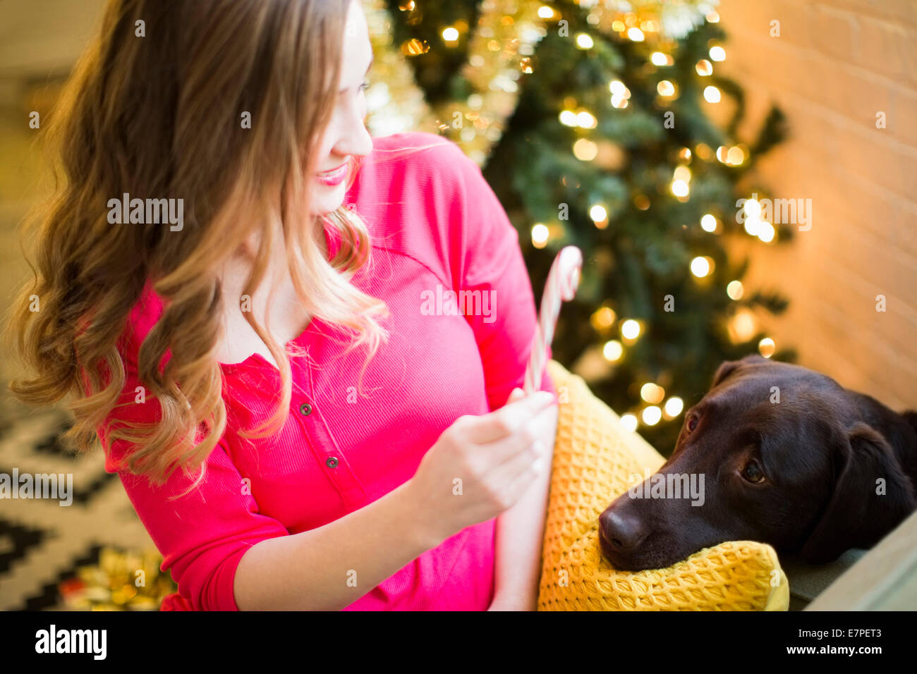 Woman showing candy cane to chocolate Labrador at Christmas - Stock Image
