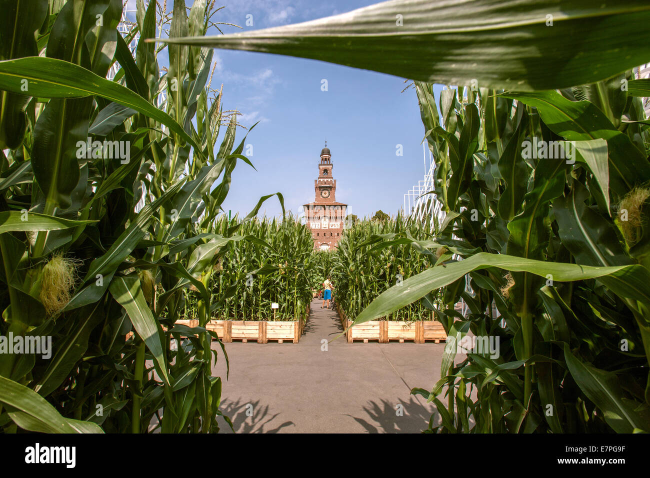 Milan, Expo 2015, EXPOGATE, Fair Universal, Sforzesco castle, city, gate, infopoint, corn flower beds, corn leaves, - Stock Image