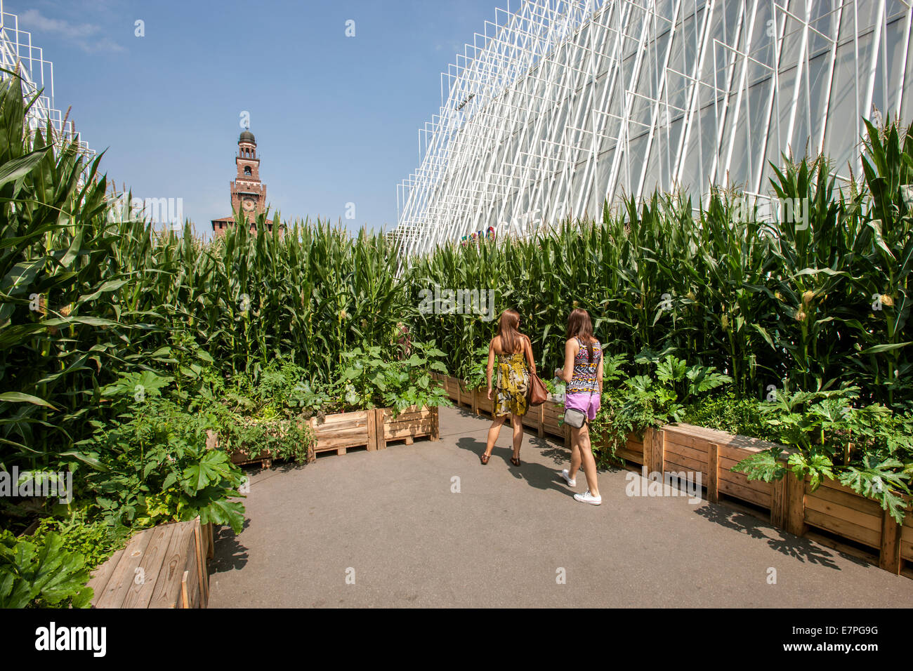 Milan, Expo 2015, EXPOGATE, Fair Universal, Sforzesco castle, city, gate, infopoint, signpost, corn flower beds, - Stock Image