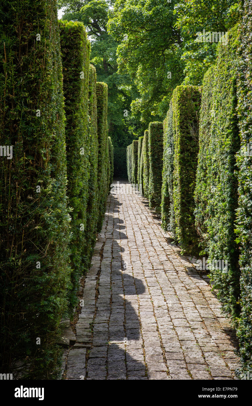Garden path between high topiary yew hedges at Avebury Manor - Stock Image
