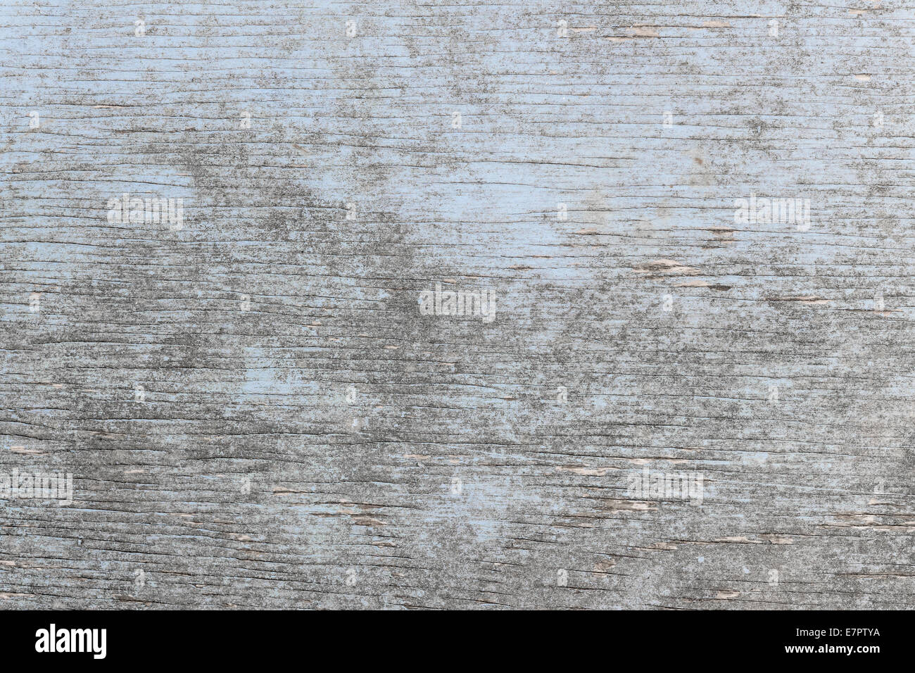 Aged wooden background of weathered distressed rustic wood with faded light blue paint showing woodgrain texture - Stock Image