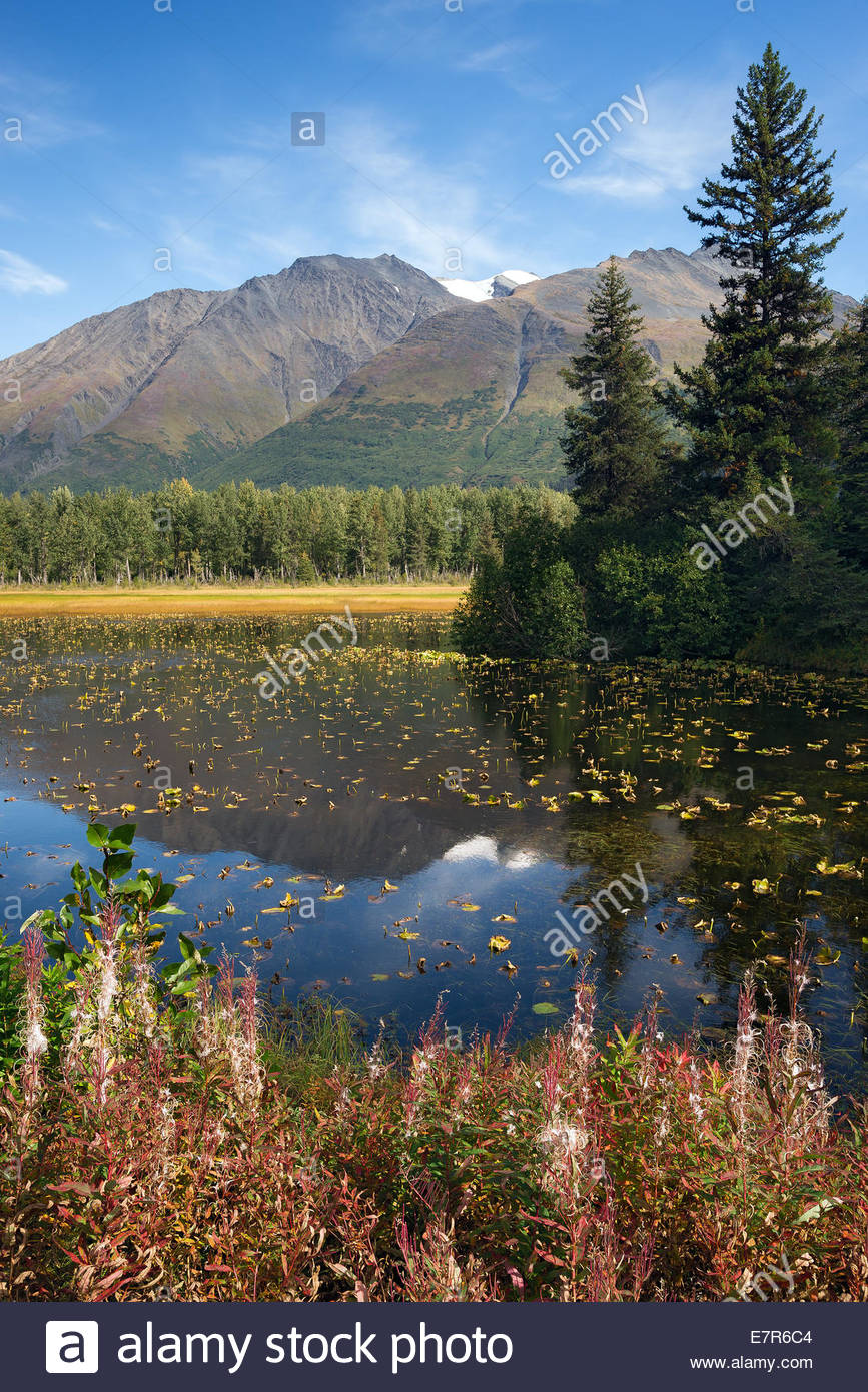 Lily pad pond near Seward - Alaska Stock Photo