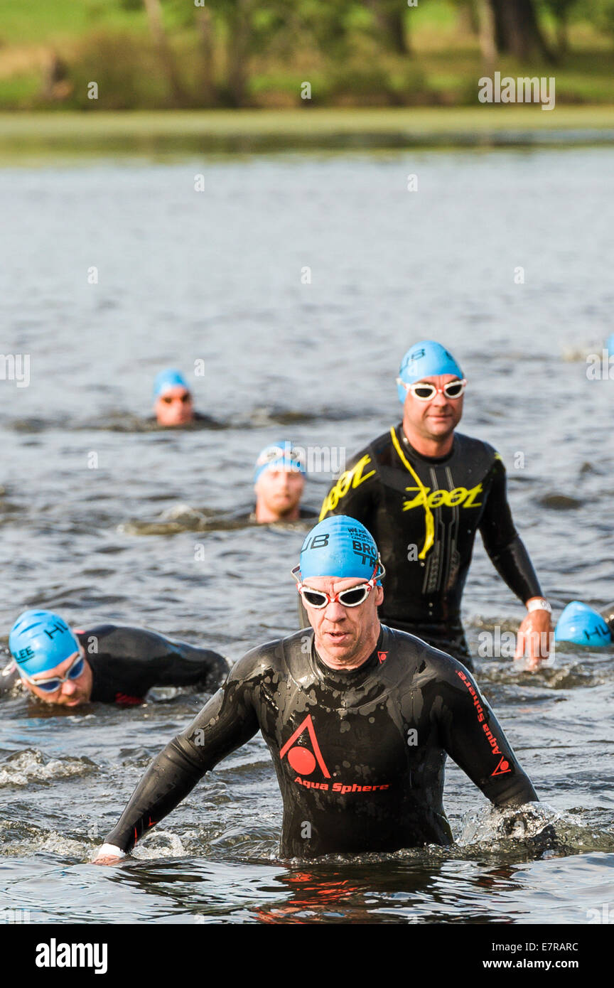 Triathlete's coming out of the swim stage at the Brownlee Tri North event at Harewood house Sept 21st 2014 - Stock Image