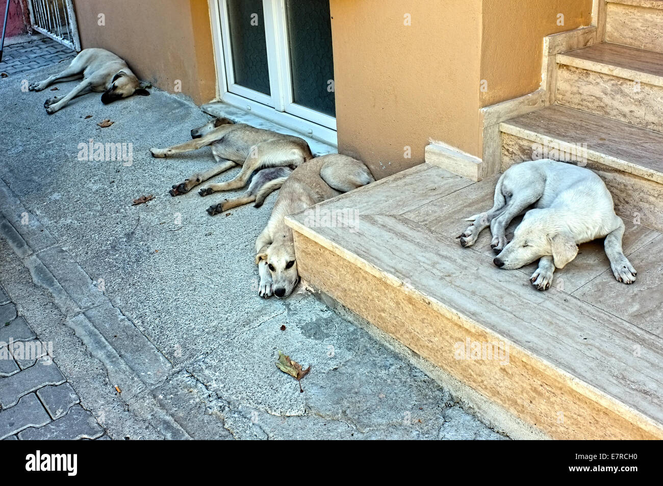 Dogs are sleeping on the street - Stock Image