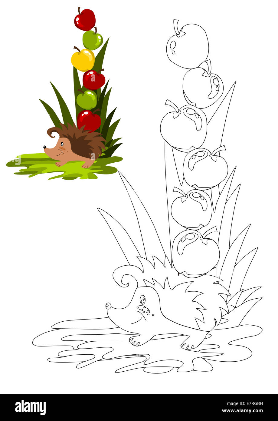 Coloring book with hedgehog vector illustration. - Stock Image