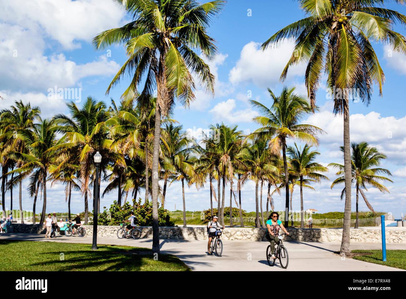 Miami Beach Florida Lummus Park Serpentine Trail palm trees bicycle path woman biking bicycle good weather tropical - Stock Image