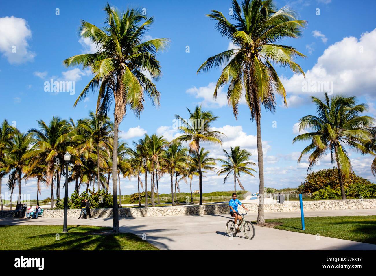 Miami Beach Florida Lummus Park Serpentine Trail palm trees bike path man biking bicycle good weather tropical - Stock Image