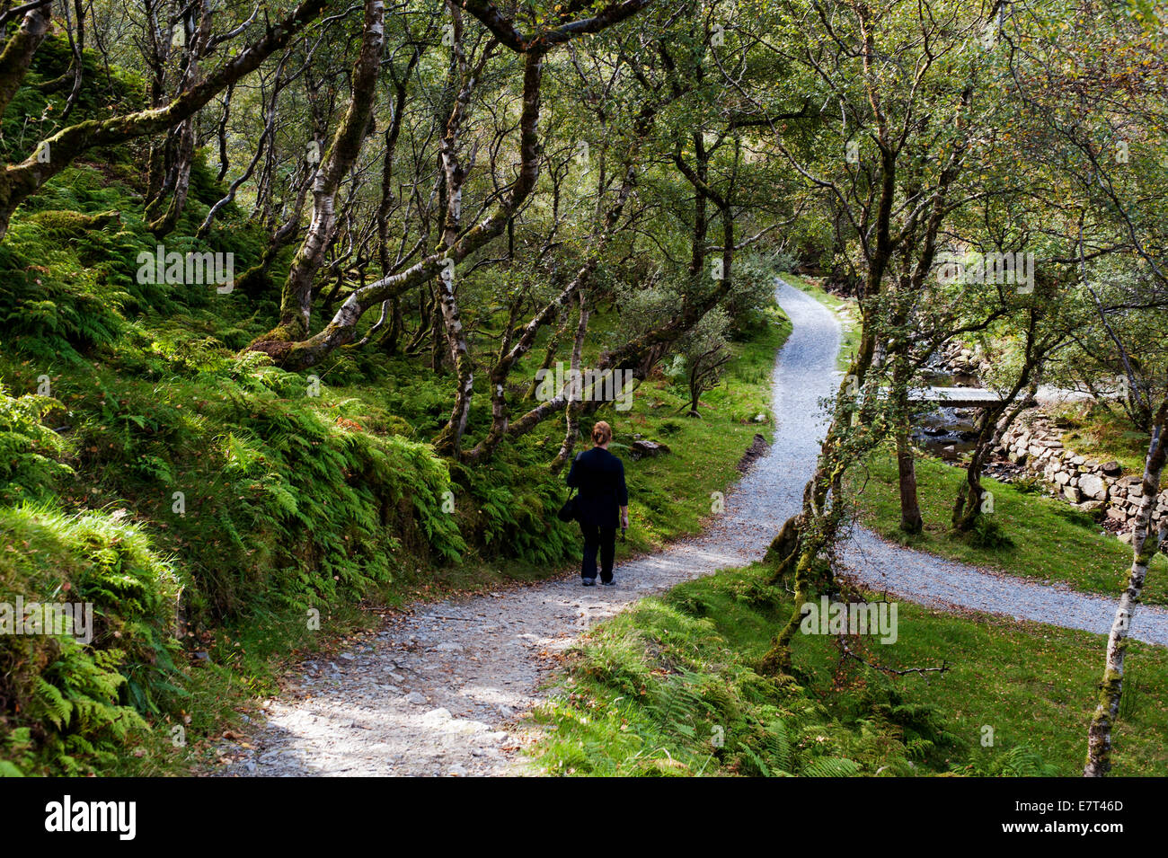 Woman walking alone through isolated forest track, County Donegal, Ireland - Stock Image