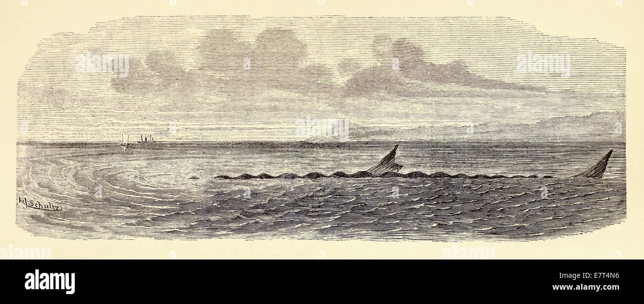 Sea serpent seen from Steamer Katie on 31 May 1882. See description for more information. - Stock Image