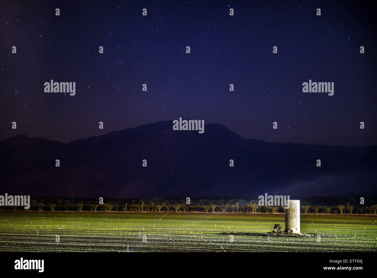 Oct. 7, 2013 - Newly planted field being irrigated at night, Vista Santa Rosa, Unincorporated Riverside County. - Stock Image