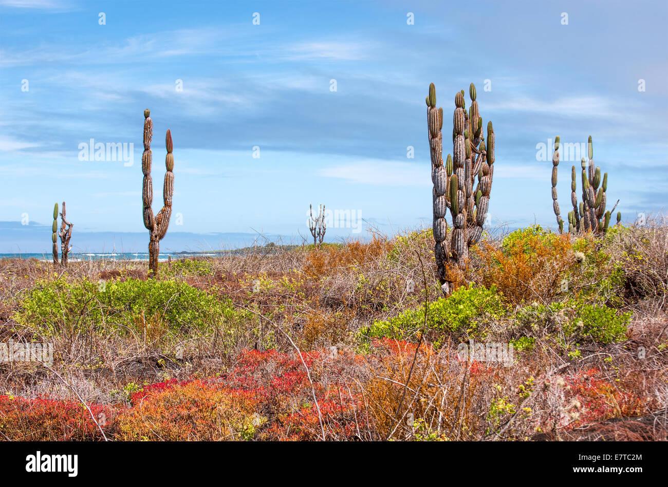 Beautiful Galapagos landscape, Isabela Island - Stock Image