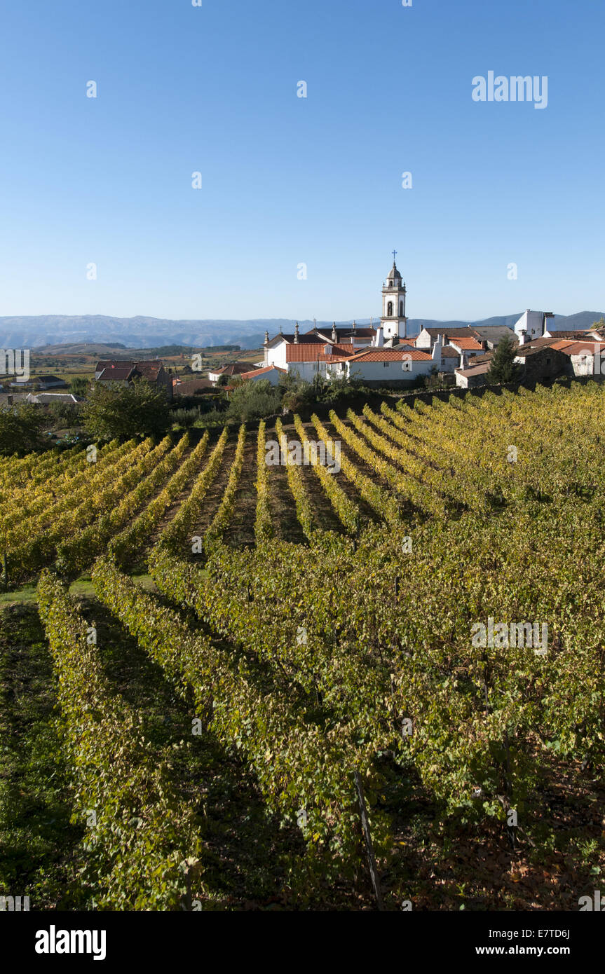 vineyards in the Douro region, Favaios, Portugal - Stock Image