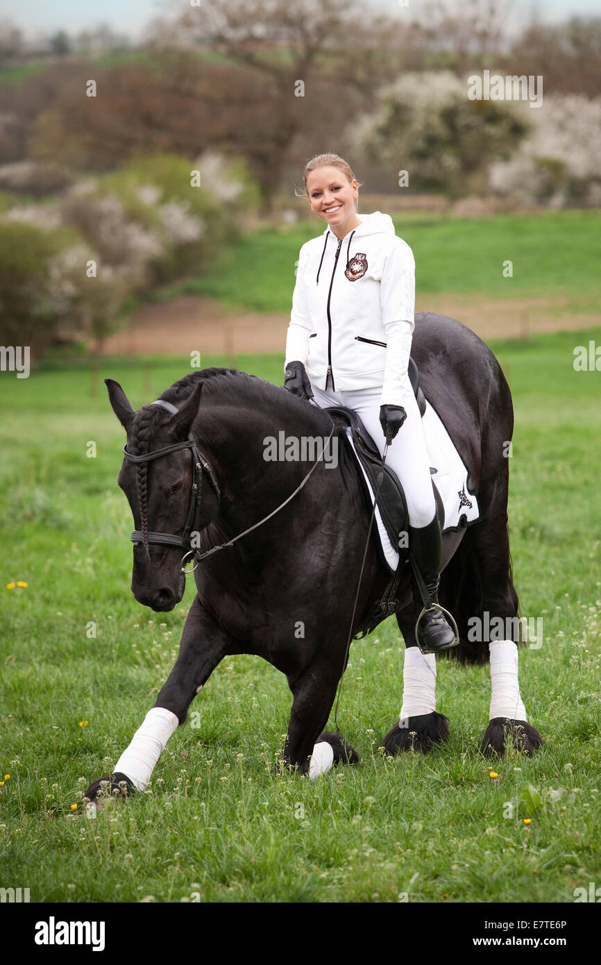 Friesian or Frisian horse, stallion, with a female rider on horseback, on a meadow, classical dressage - Stock Image