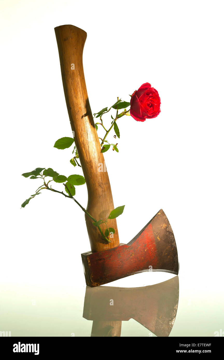 From the handle of an ax sprouts a rose, symbolic image for nonviolence and peace - Stock Image