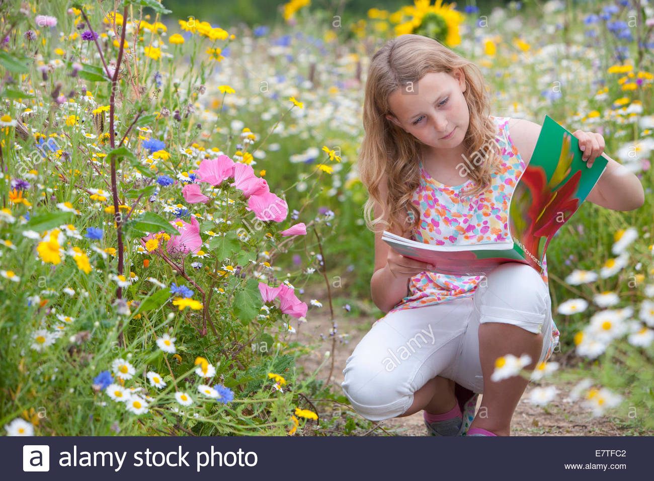 Girl squatting on path looking at botany book in field of wildflowers - Stock Image