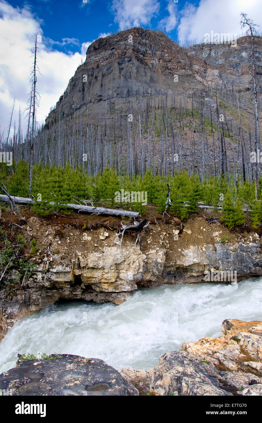 Marble Canyon, Kootenay National Park , British Columbia, Canada - Stock Image
