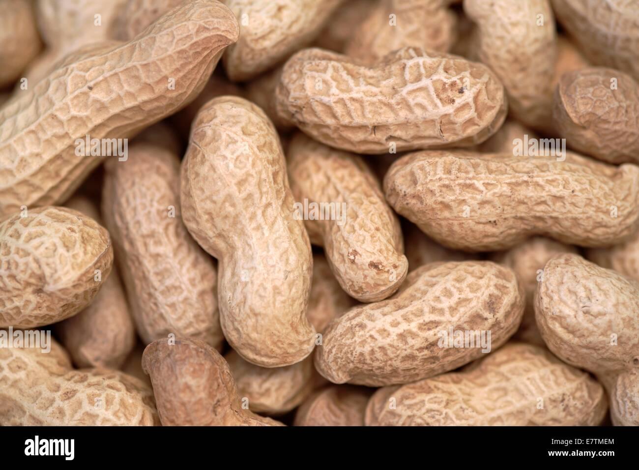 Monkey nuts (Arachis hypogaea). - Stock Image