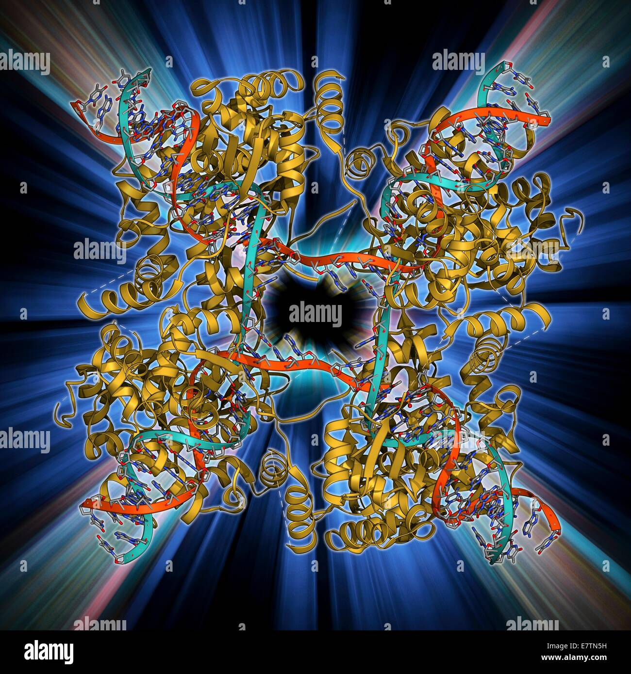 DNA Holliday junction complex. Molecular model of the enzyme FLP recombinase in complex with a Holliday junction - Stock Image