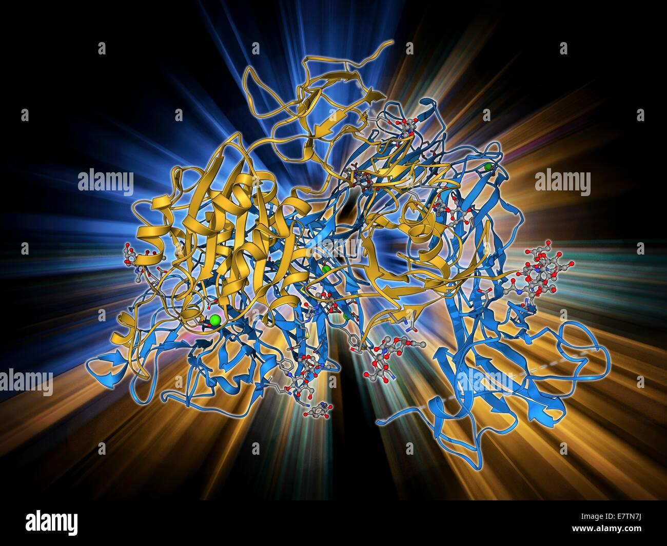 Uroporphyrinogen III decarboxylase. Molecular model of the enzyme human uroporphyrinogen III decarboxylase (UROD). - Stock Image