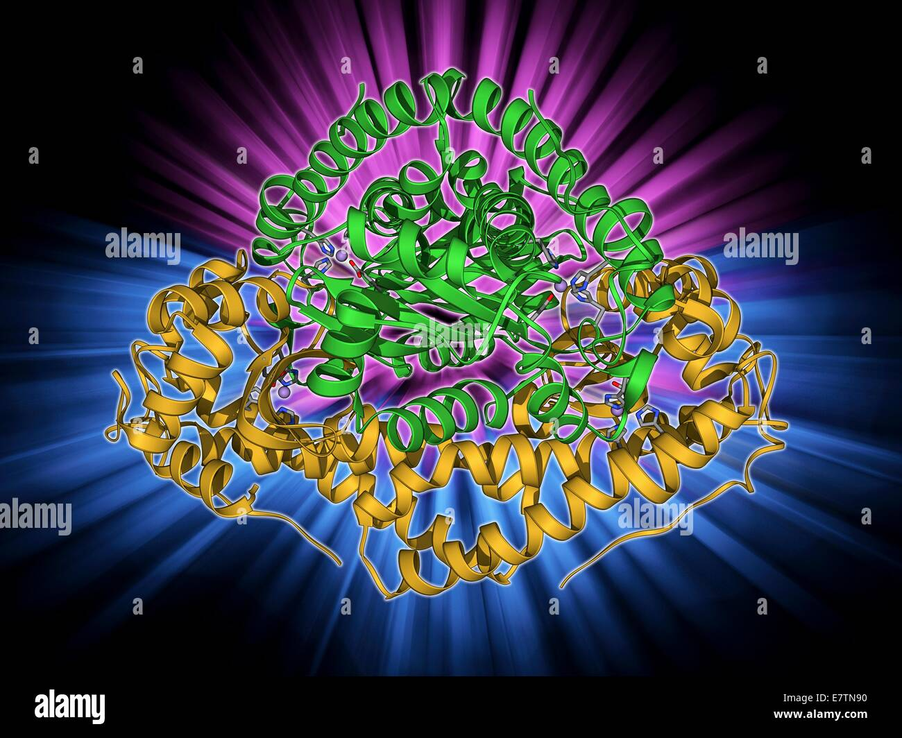 Manganese superoxide dismutase enzyme, molecular model. This enzyme scavenges and decomposes the potentially toxic - Stock Image