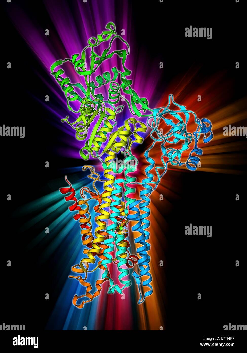 Calcium Atpase Ion Pump Molecular Model This Enzyme Is Found In