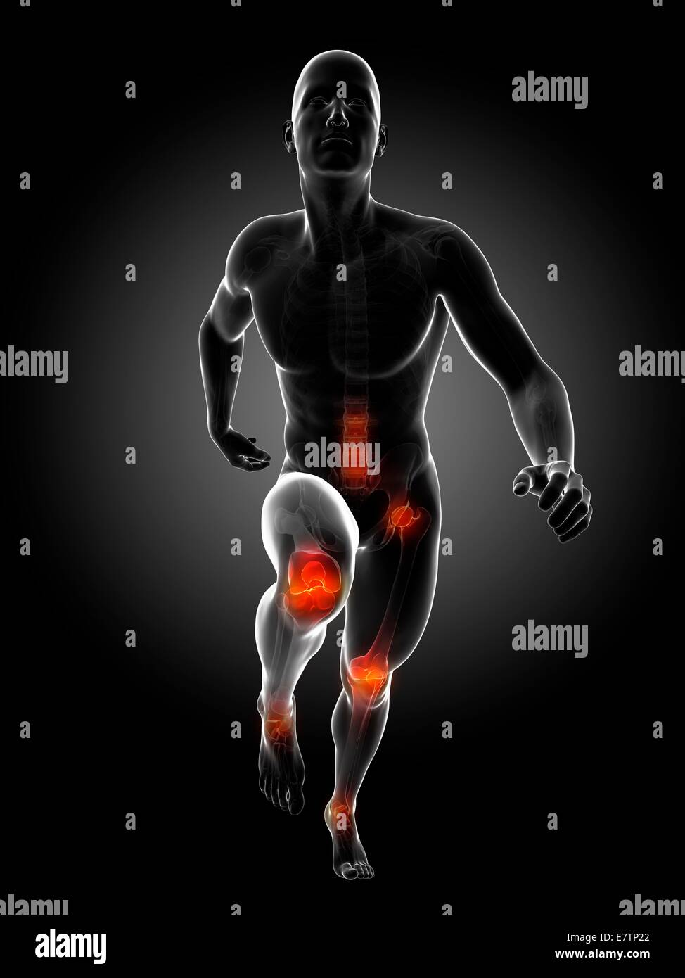 Human anatomy of a runner\'s joints, computer artwork Stock Photo ...