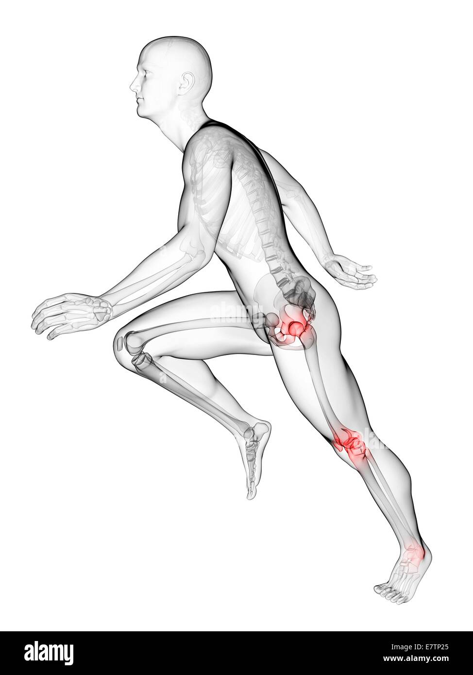 Human Anatomy Runners Knee Joint Stock Photos & Human Anatomy ...