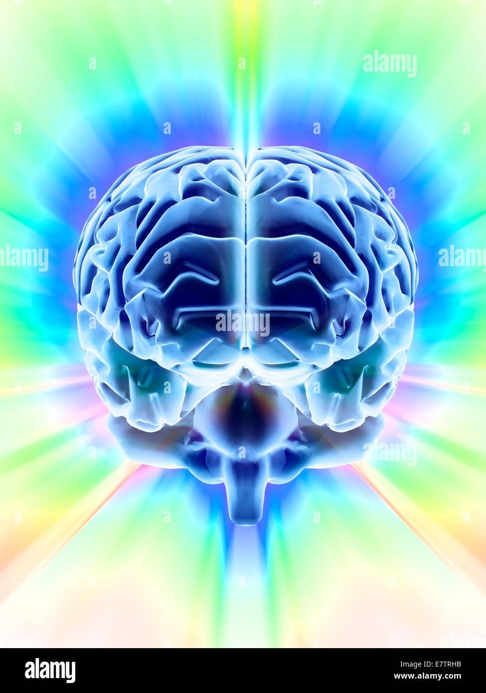 Human brain, computer artwork. - Stock Image