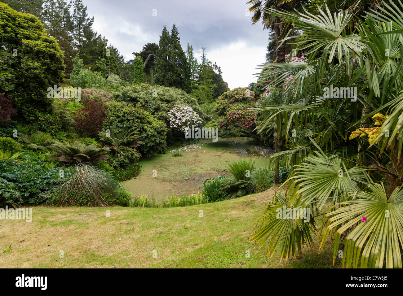 View of the entrance to the Jungle at Heligan, near Mevagissey, Cornwall - Stock Image
