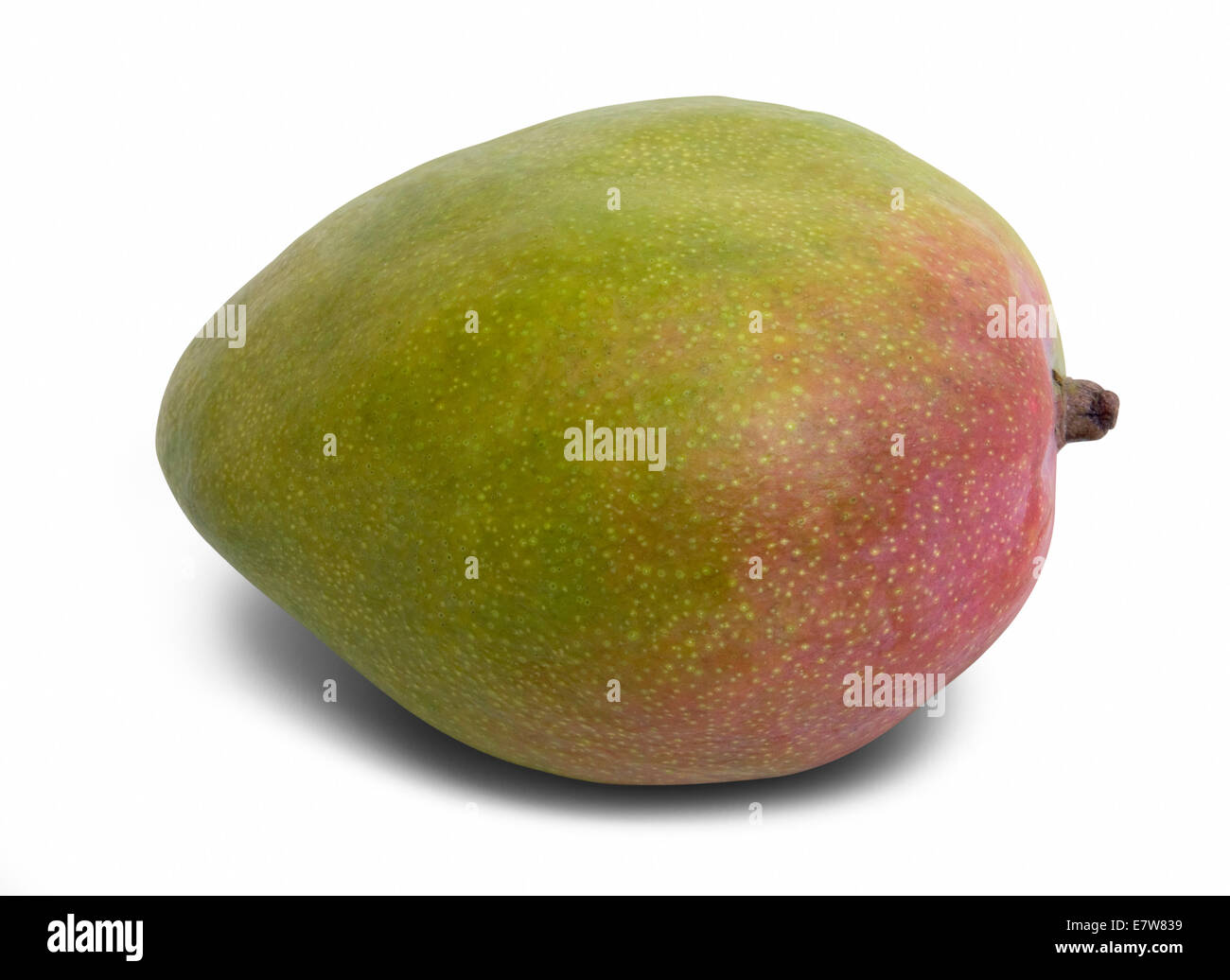 mango fruit in white back with shadow and clipping path - Stock Image