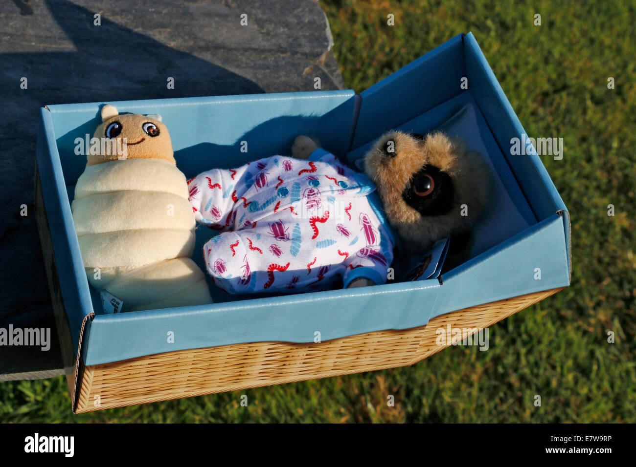 Meerkat Toy Stock Photos & Meerkat Toy Stock Images - Alamy