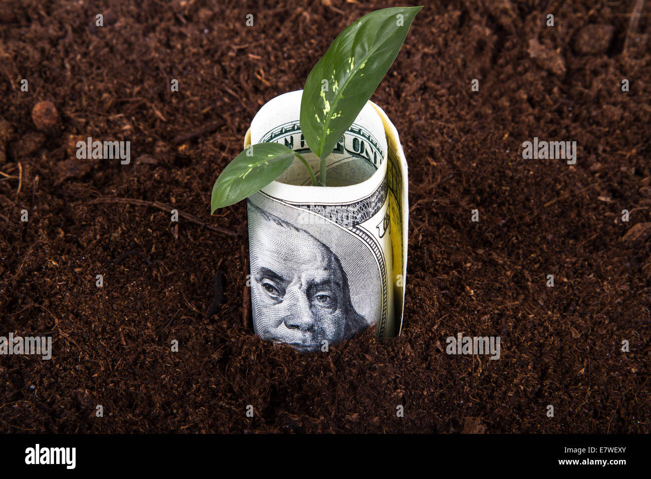 One hundred dollar bill money growing in soil with green plant leaves. - Stock Image