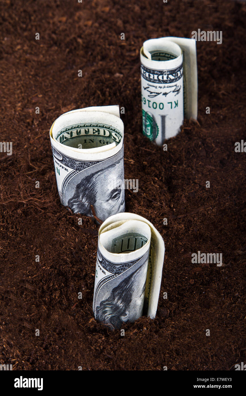 One hundred dollar banknotes growing in soil. - Stock Image