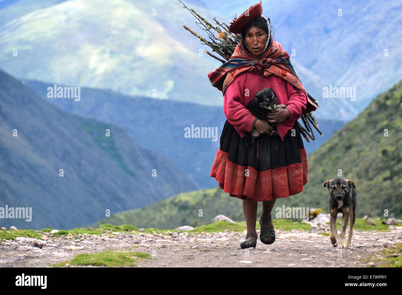 Elderly woman wearing traditional costume while gather wood, accompanied by a young dog, Andes, near Cusco, Peru - Stock Image