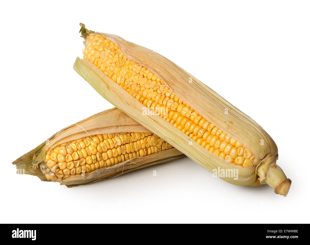 Two ears of corn isolated on a white background - Stock Image