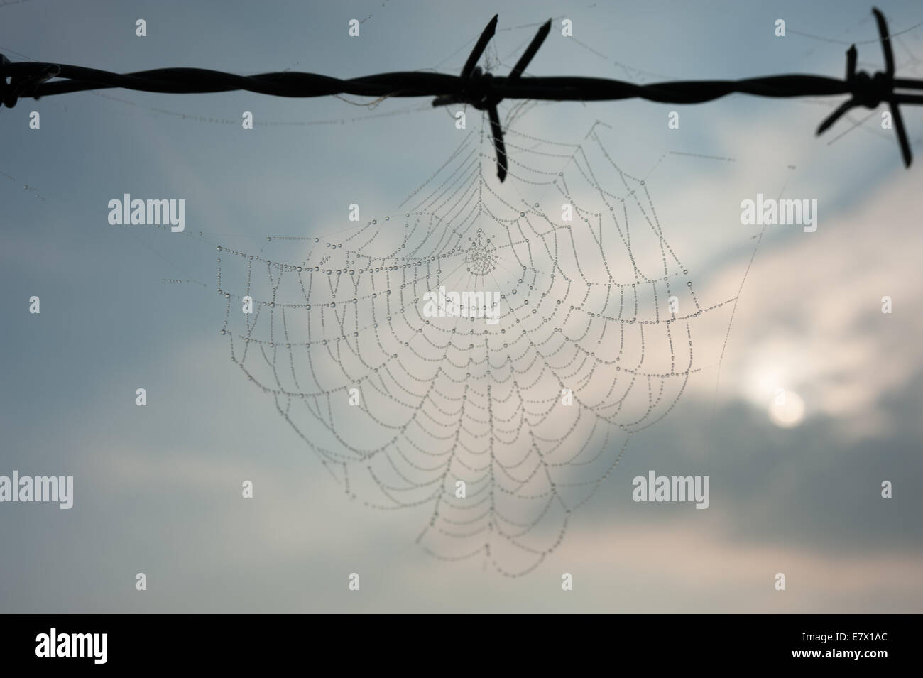 Spider Web Barbed Wire Stock Photos & Spider Web Barbed Wire Stock ...