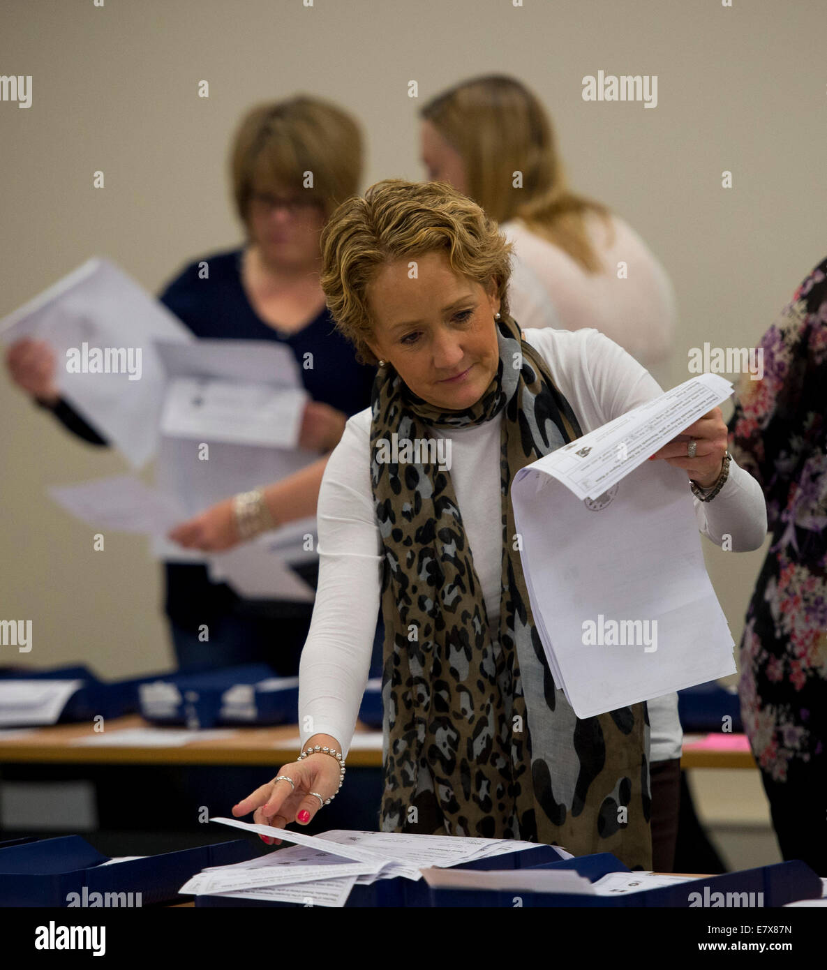 Ballot paper votes are counted by vote counters during the European election in Merthyr Tydfil. - Stock Image