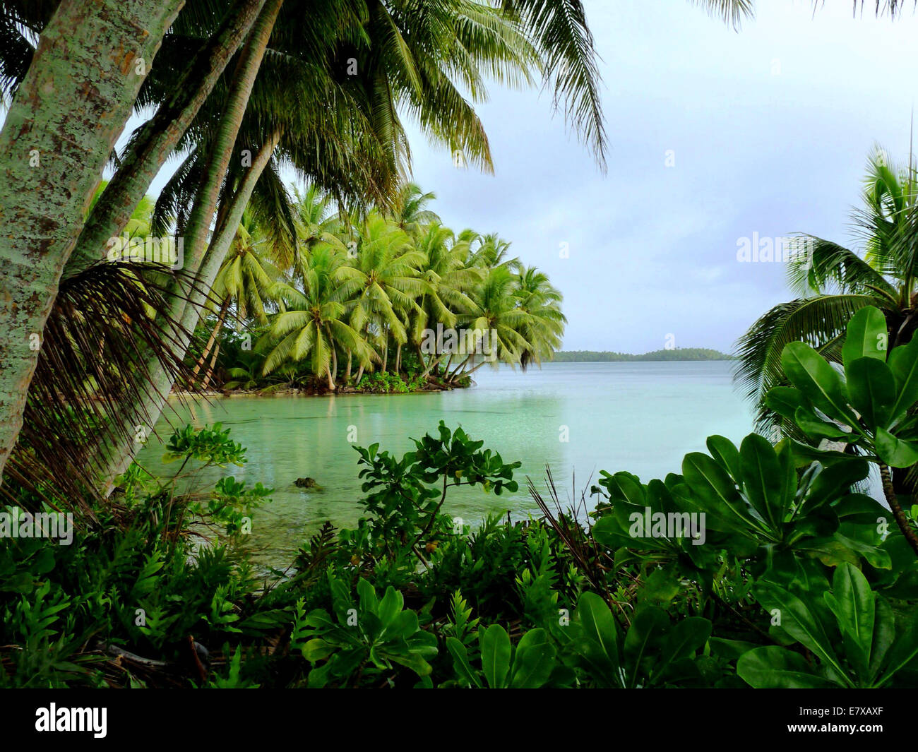 Palm fringed Strawn Island lagoon on Palmyra Atoll and unoccupied island in the equatorial Northern Pacific administered - Stock Image