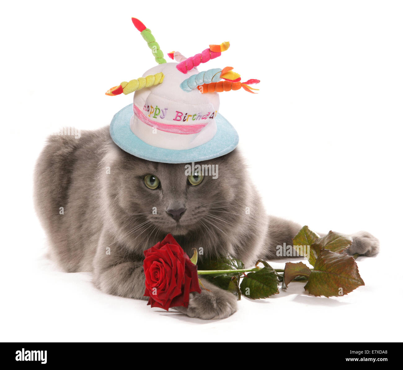 Cat With Rose And Birthday Hat Cutout
