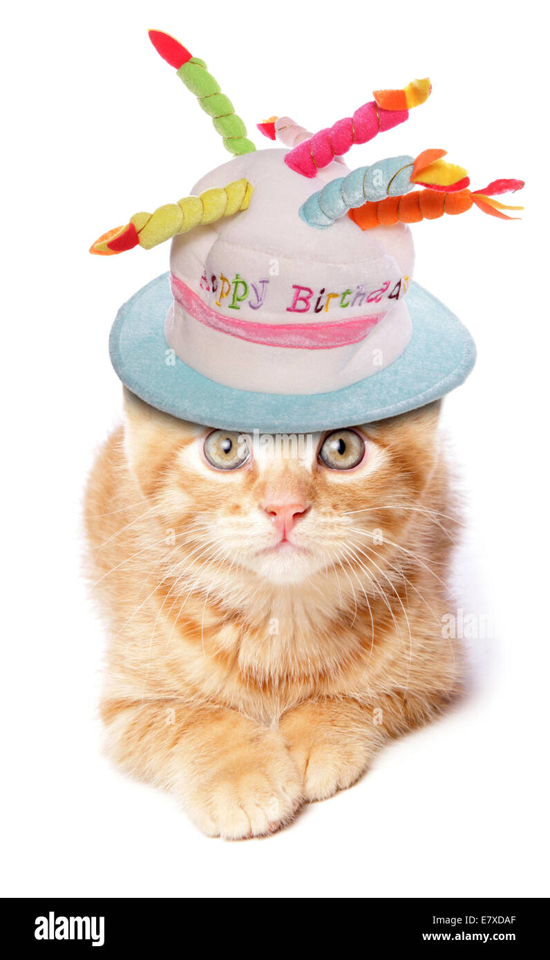 Ginger Kitten Laying With Birthday Hat