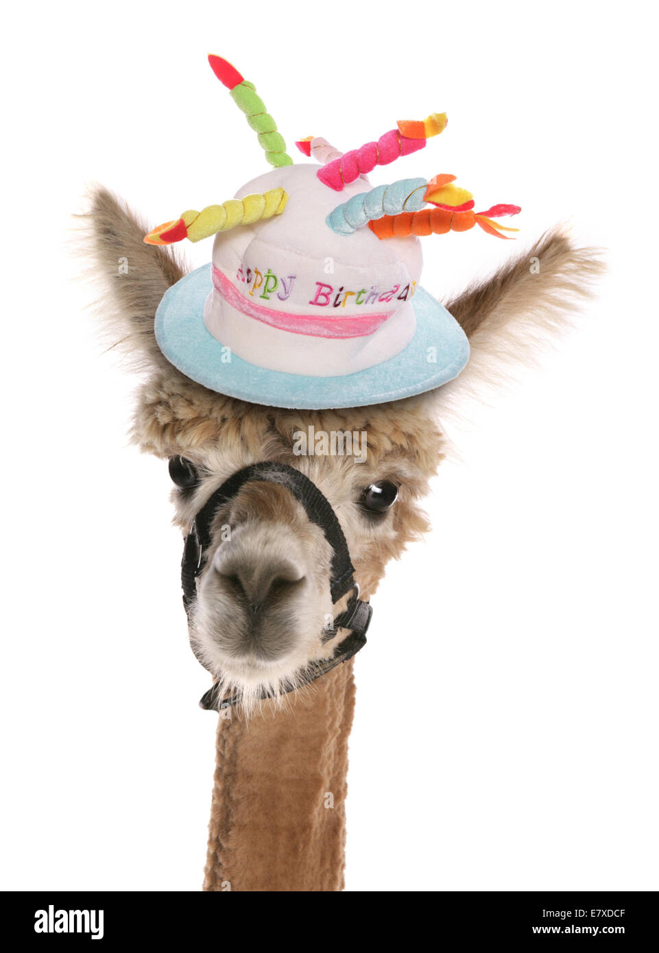 Alpaca Wearing A Birthday Hat Cutout