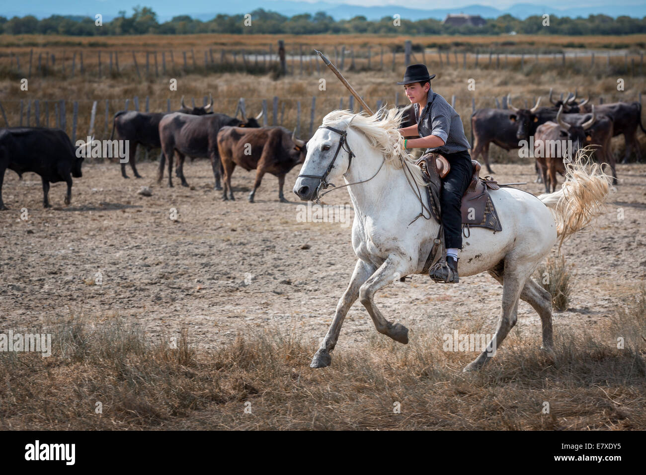 A young French Guardianson on horse, Camargue, France - Stock Image