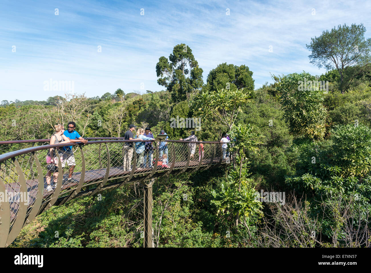 Visitors on the Centenary Tree Canopy Walkway Kirstenbosch Botanical Garden, Cape Town, South Africa - Stock Image