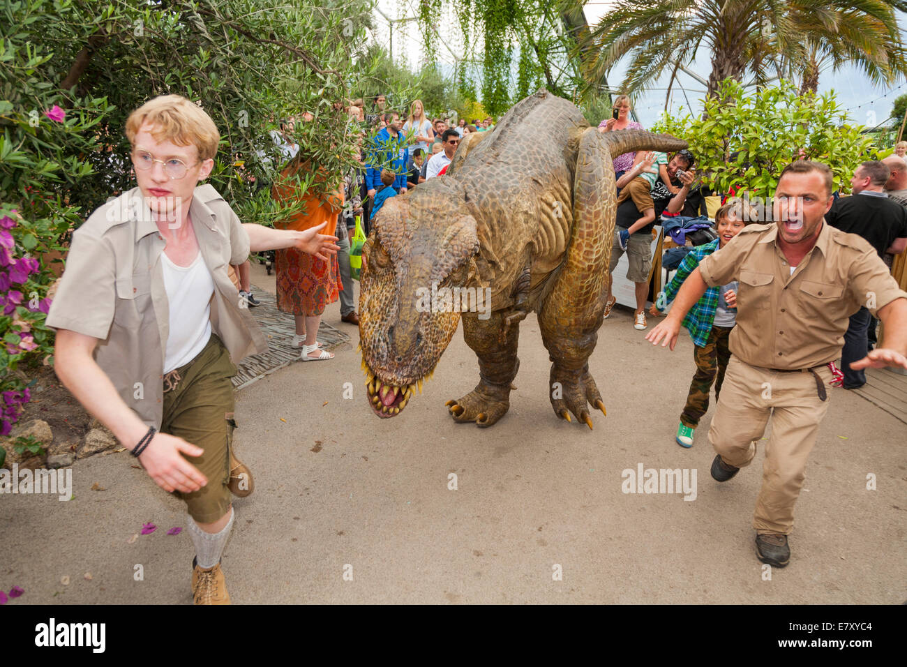 A Dinosaur on the loose (with guards) entertains children & families at the Eden Project in Bodelva, Saint Austell - Stock Image