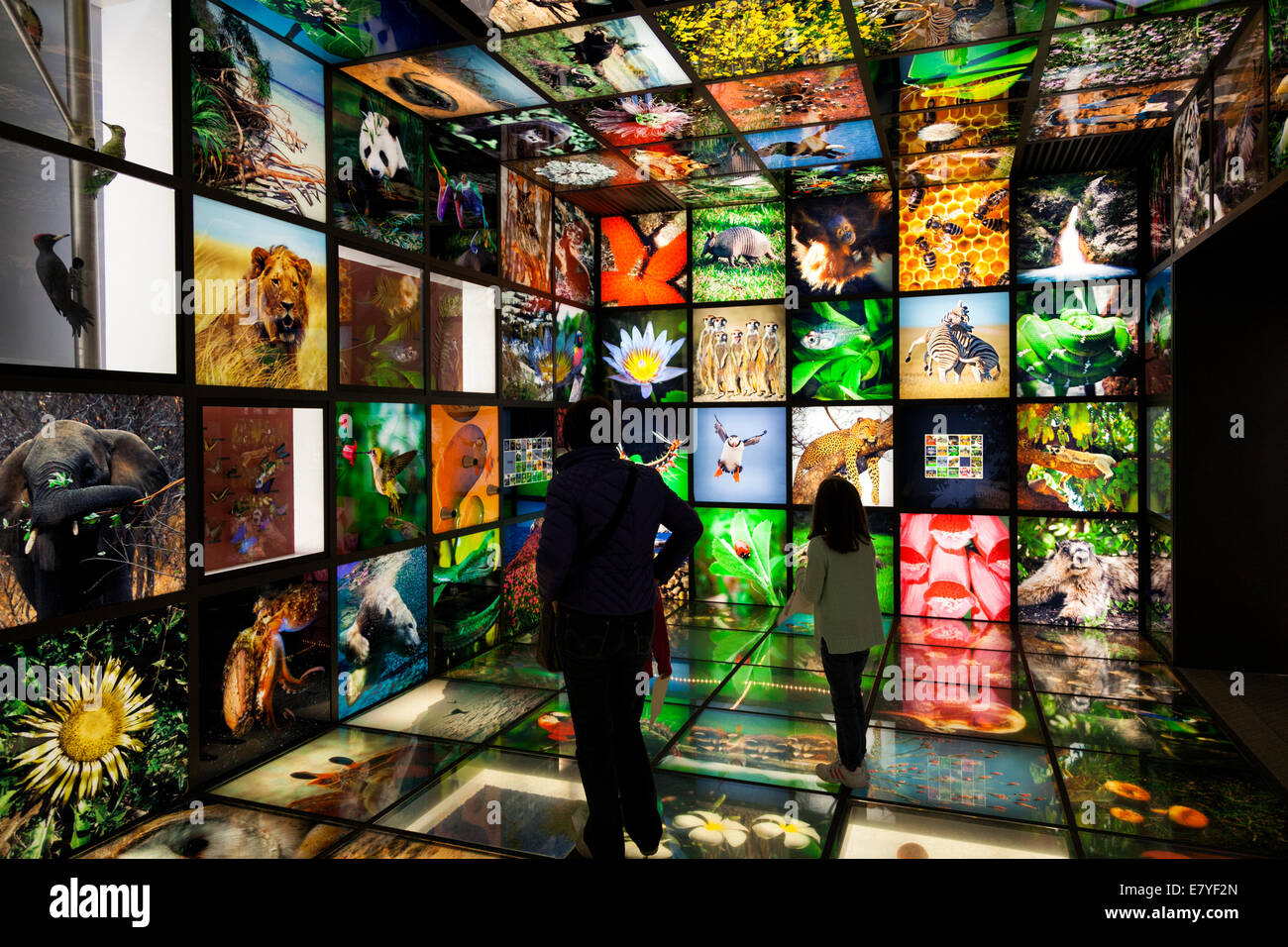 People inside a multimedia nature showroom - Stock Image