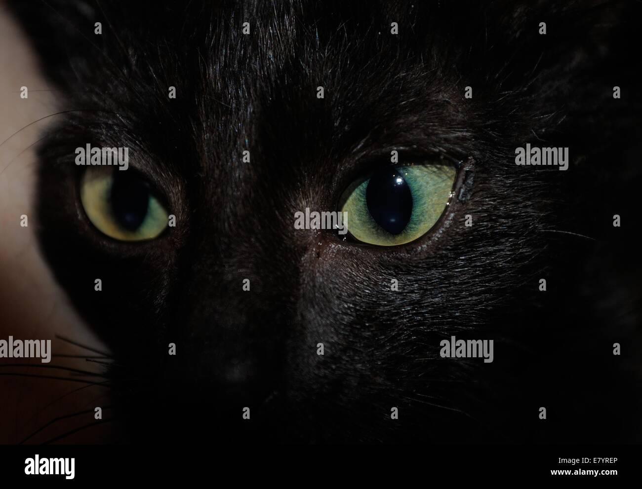 Feline gaze - Stock Image