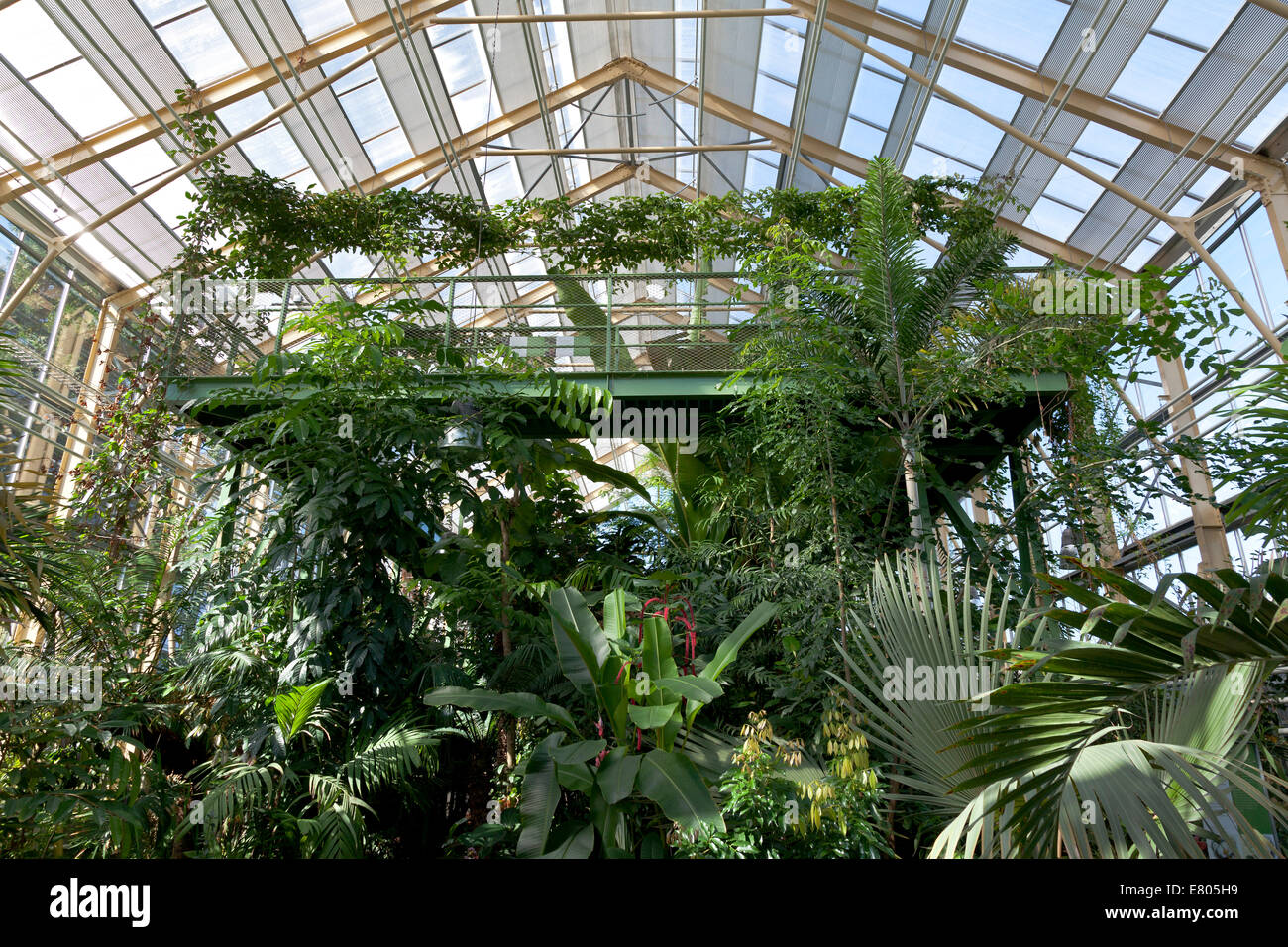 Botanische Tuin Leiden : Tropical greenhouse in the hortus botanicus in leiden holland