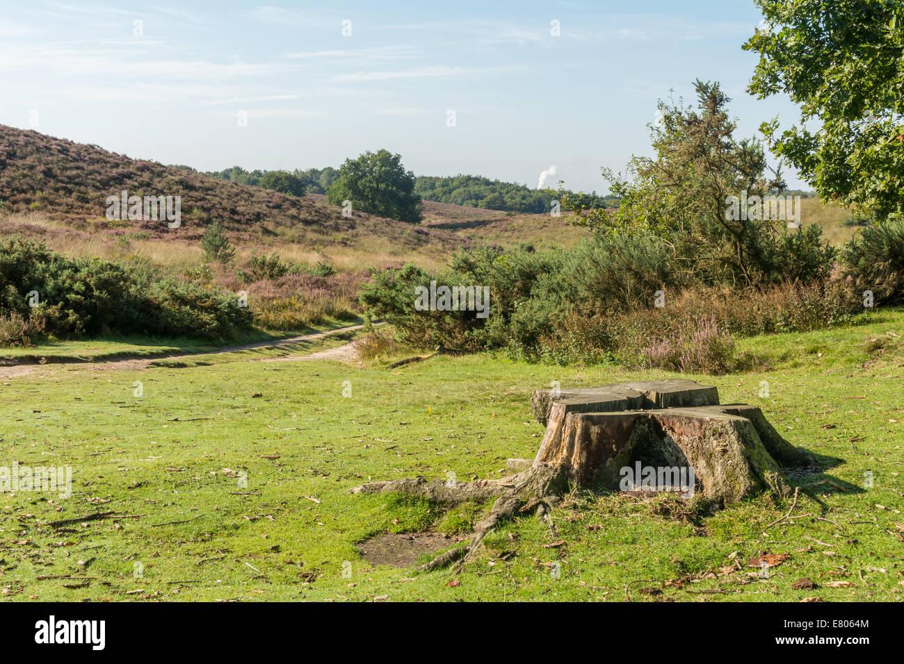 Tree stump between hills in dutch heathland Stock Photo