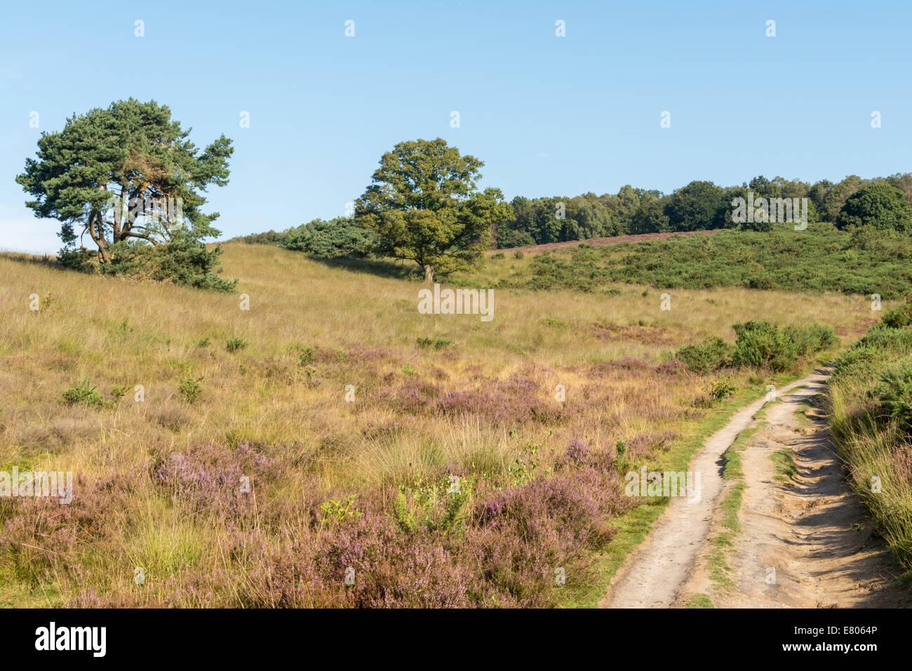 Path leading through hills in dutch heathland Stock Photo
